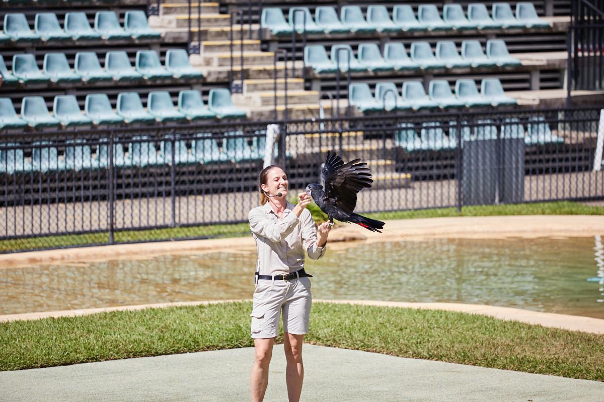 Crocosseum, Show, Tiershow, schwarzer, Kakadu, Tricks, Tiere, animal, show, australia zoo