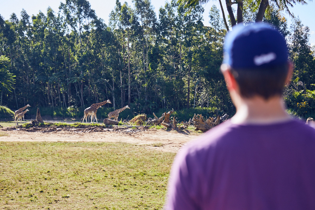 giraffes, Miles and Shores, travelblog, things to see, Australien, australia, Ronnie, a day in, steve irwin