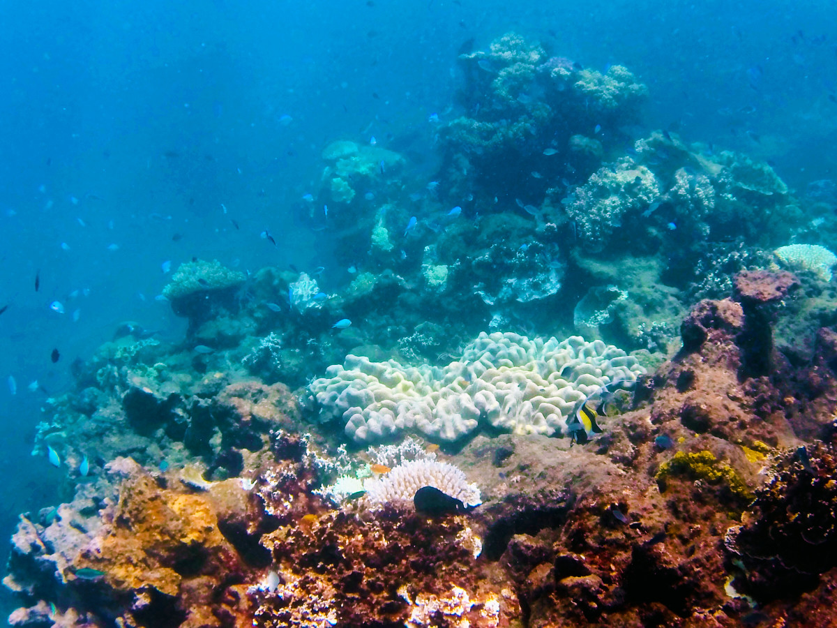 Great Barrier Reef – Tusa 6 Experience